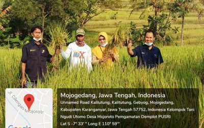 Ubinan Demplot  PT Pusri di Kelompok Tani Ngudi Utomo, Desa Mojoroto, Kecamatan Mojogedang